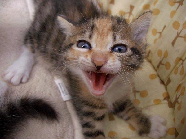 赤ちゃん猫の威嚇